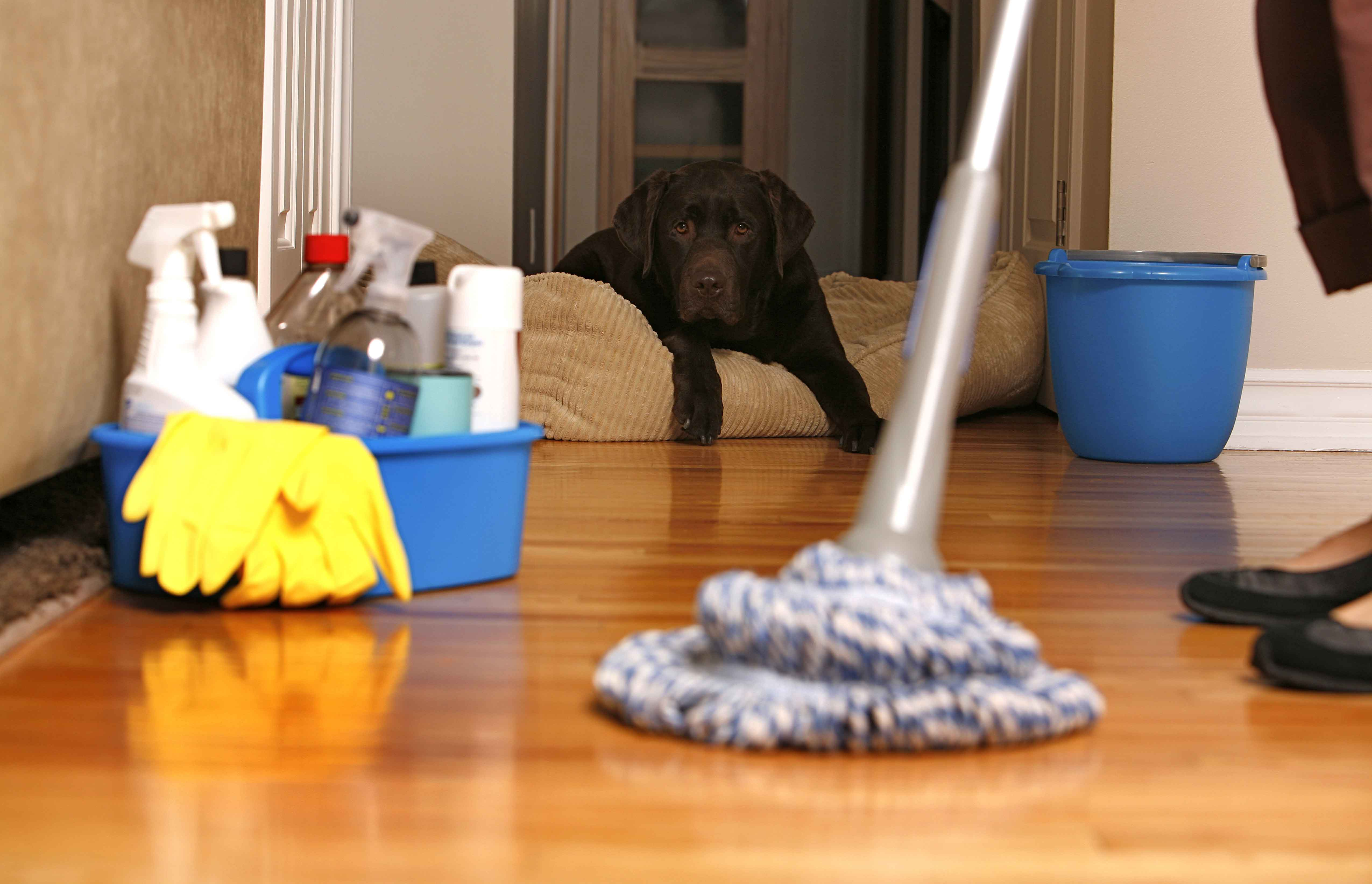 Phenomenal House Cleaning Services In London Mybrum Co Uk Blog Download Free Architecture Designs Ferenbritishbridgeorg